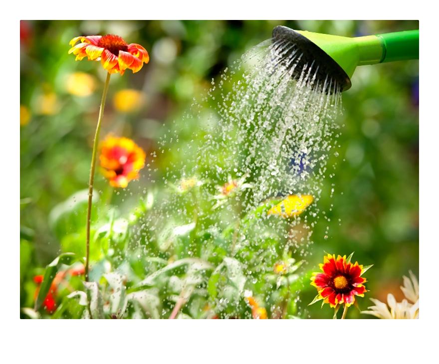 Podlewanie roślin nie tylko latem. Czyli jak często podlewać trawę i kwiaty?